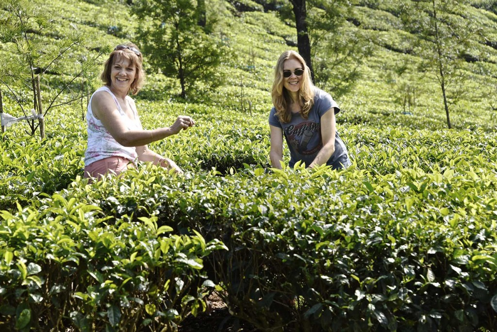 Tea Estate 72dpi