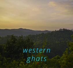 Ashtanga Nirvrta is (KPJAYI Certified) Philippa Asher & Mahesh Nandeesh's 'Joyful Ashtanga Yoga Homestay Retreat', in the Western Ghats of South India